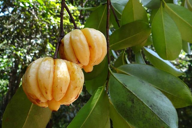 Abnehmen mit Garcinia Cambogia