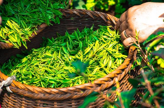 Detox und Abnehmen mit Teatox Tees